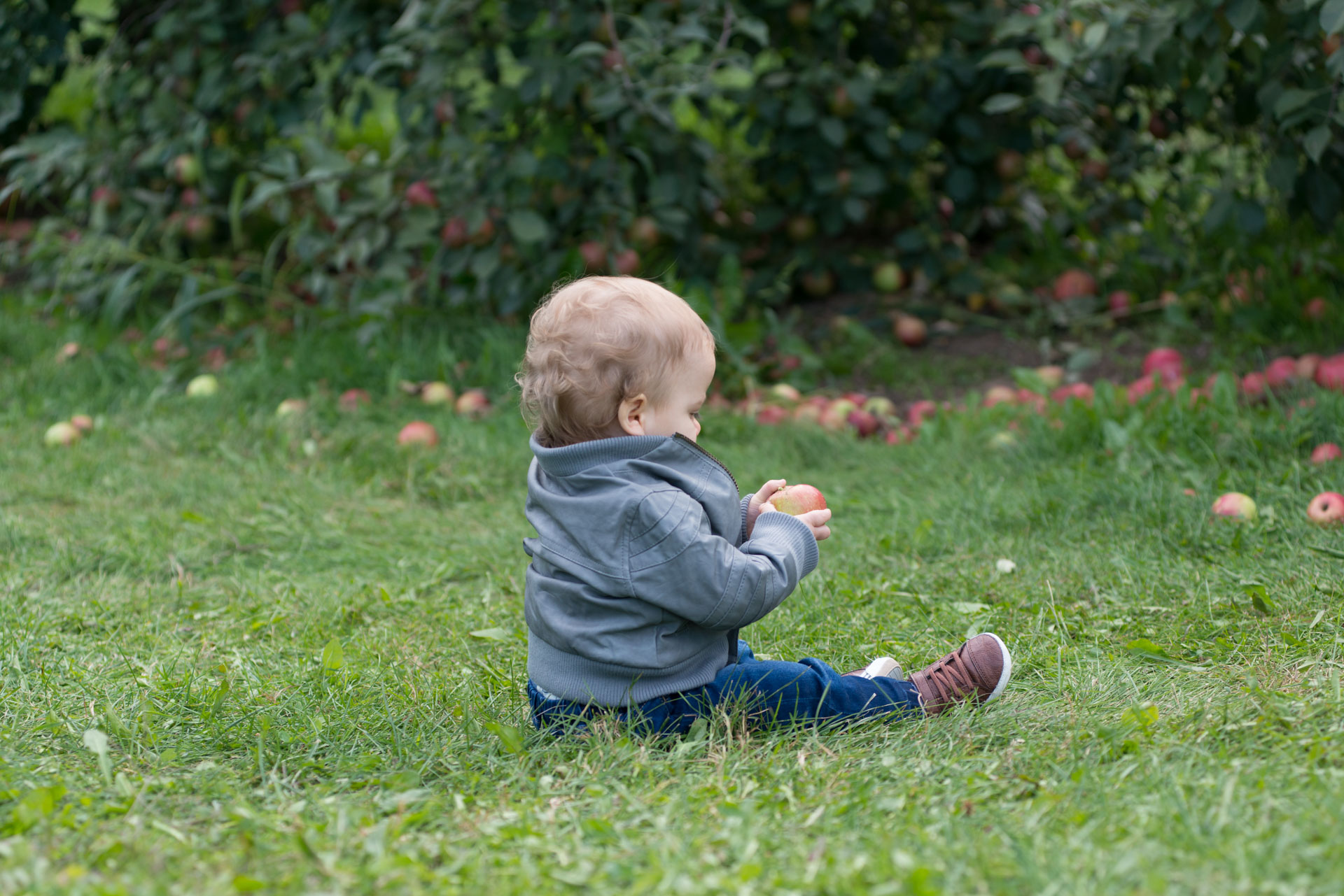 Addie Lane Studios taking children photography at Aamodt's Apple Farm in Stillwater where this little boy goes on an apple adventure.